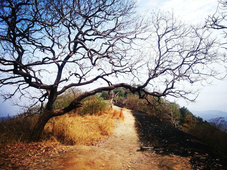 At Karnala Fort, Raigad Maharashtra India! First Eyeem Photo Karnala Bird Sanctuary Trek Sahyadris Nature Maharashtra