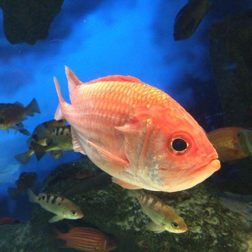 さかな。タイなんだけど、名前忘れちゃったわ。( °ー° ) Tobaaquarium 鳥羽水族館 Aquarium 水族館 Fish 魚