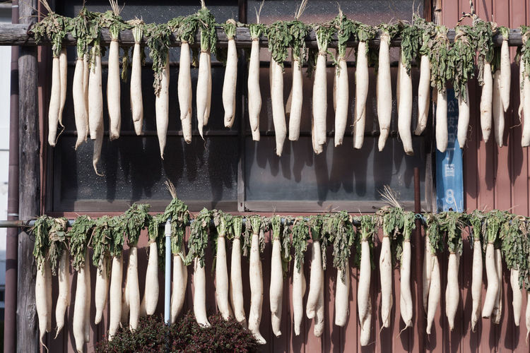 Radishes Drying On Wooden Poles On Sunny Day