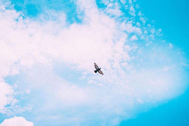 Flying Cloud -