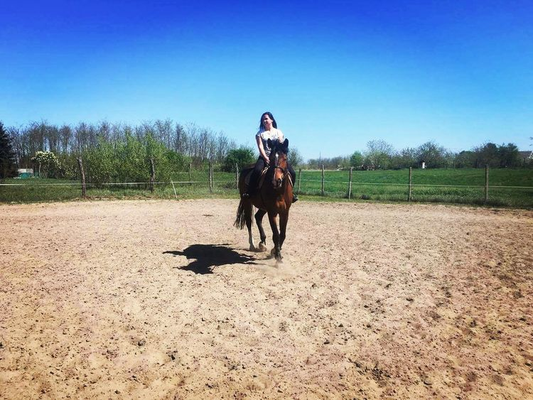 My one and only ❤🇨 Clinton Sporthorse Love My Horse Holsteiner Springriding I Love Animals That's Me Helloworld