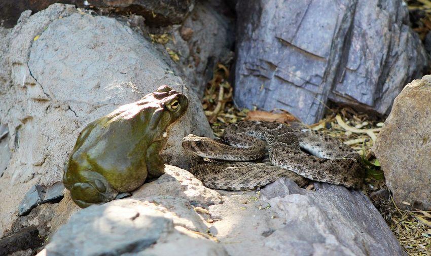 Frog and snake at zoo