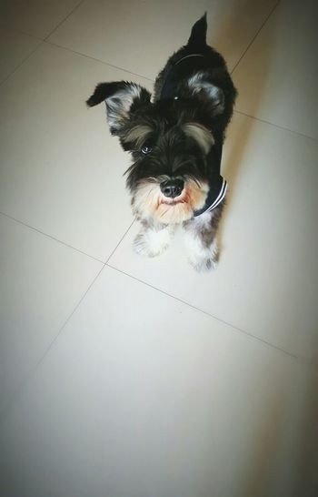Hello EyeEm..enjoy your weekend ^_^ My Dog Baxter Miniature Schnauzer Cute♡ I Love My Dog Taking Pictures What Makes You Calm
