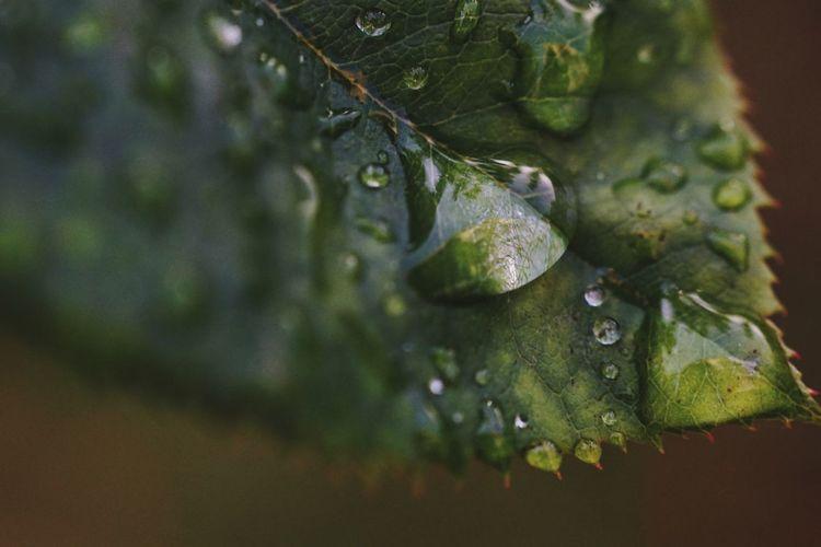 Drop RainDrop