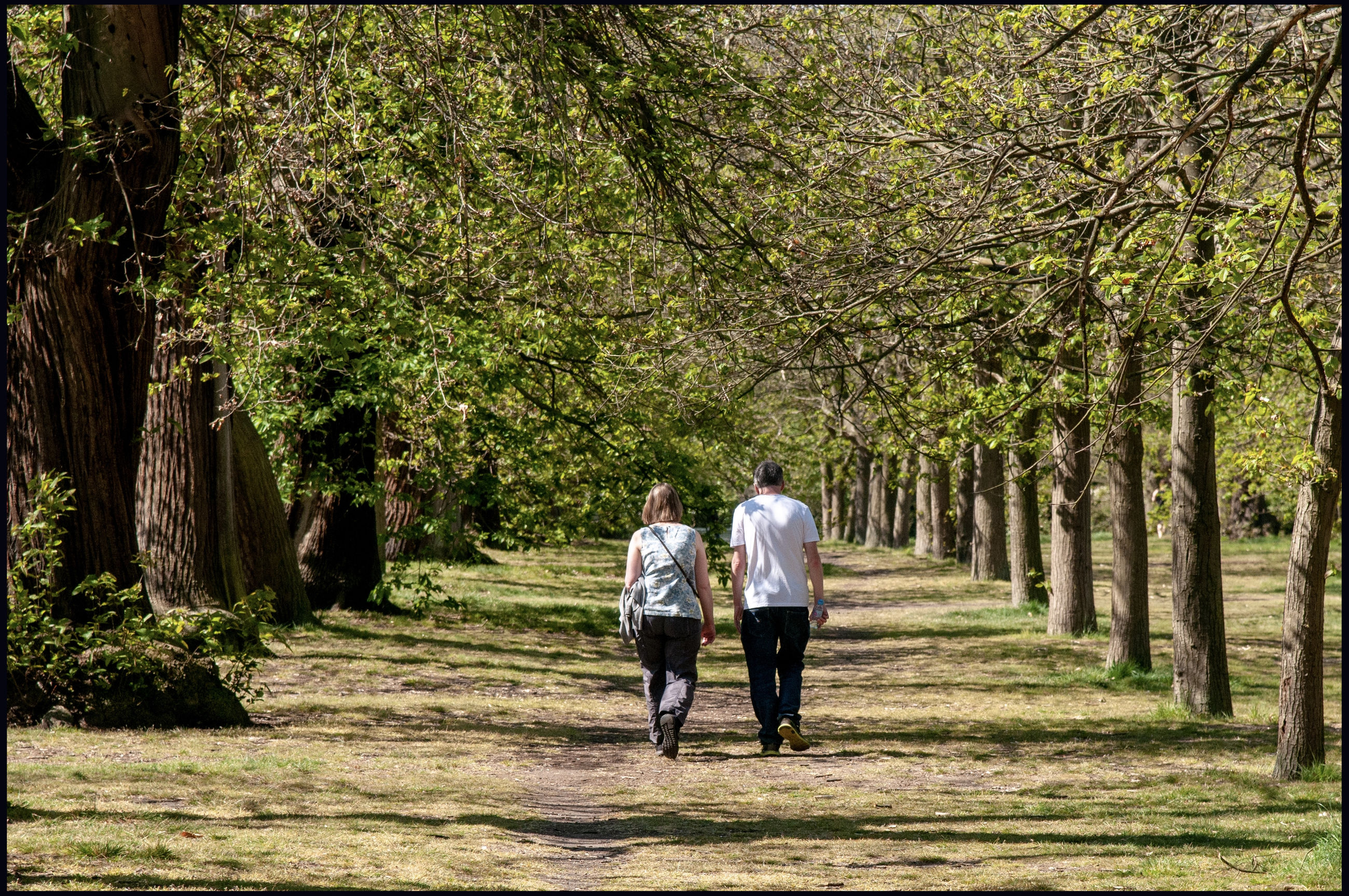 tree, plant, full length, two people, walking, rear view, togetherness, men, adult, love, nature, couple - relationship, casual clothing, women, emotion, day, heterosexual couple, positive emotion, bonding, lifestyles, outdoors, treelined
