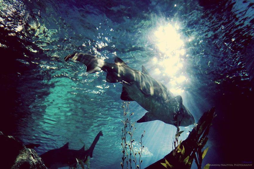 Animal Themes Underwater UnderSea Sea Life Fish Water Animals In The Wild
