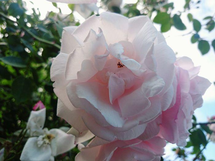 :-D Picking Flowers  First Eyeem Photo