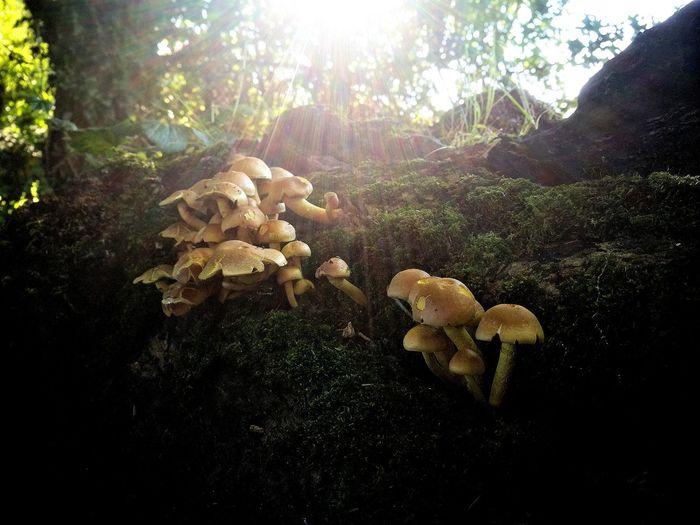 Fungi on a
