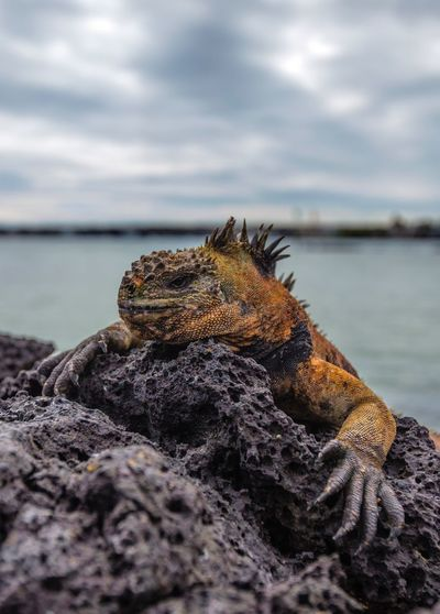 Close-up of lizard on rock at shore against cloudy sky