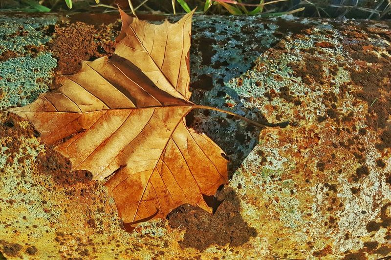 Fall Autumn Leaves Nature Note 5 Learn & Shoot: Simplicity