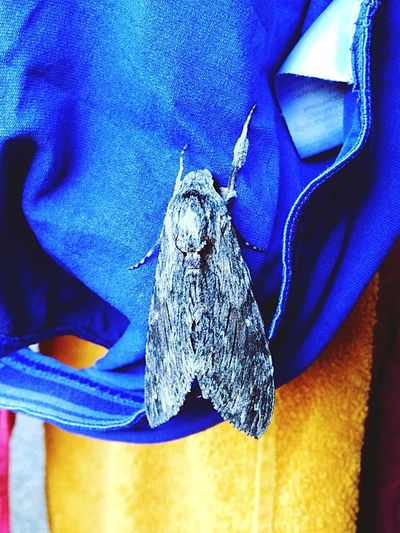 Blue Close-up Indoors  Adult One Person Day People One Man Only Human Hand Only Men Moth Moth On Underwear