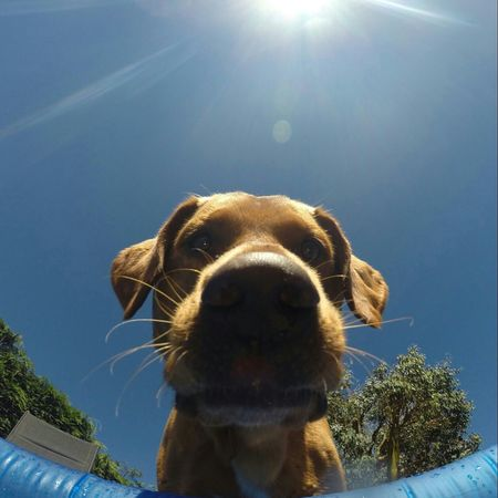 Dogoftheday Taking Photos Cheese! Labrador Essex One Of My Favorite Things
