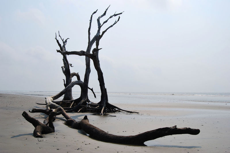 View of bare tree on beach