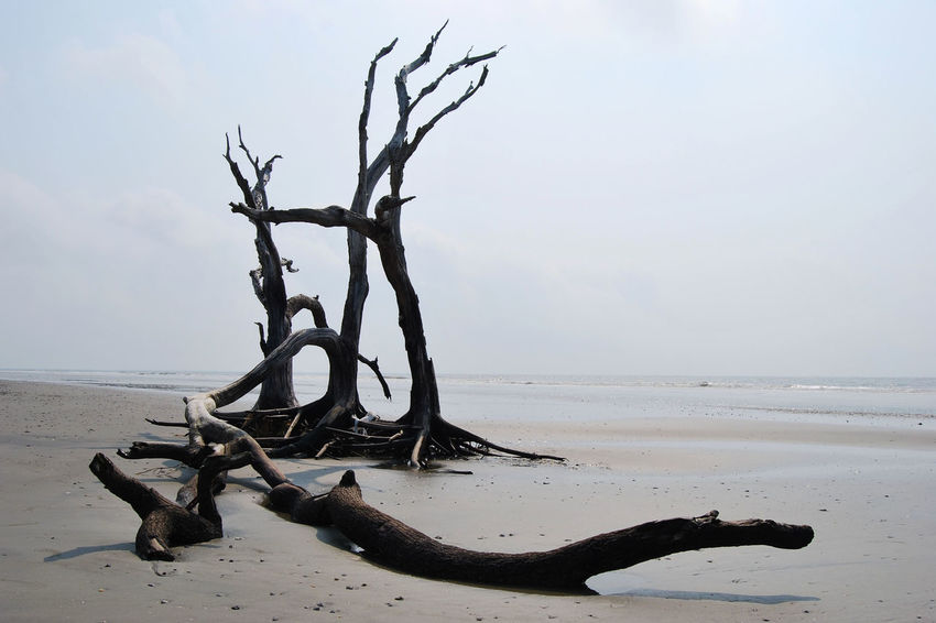 Bare Tree Beach Beauty In Nature Driftwood Foley Beach Horizon Over Water Log Remote Sand Scenics Shore South Carolina Tranquil Scene Tranquility Tree Trunk