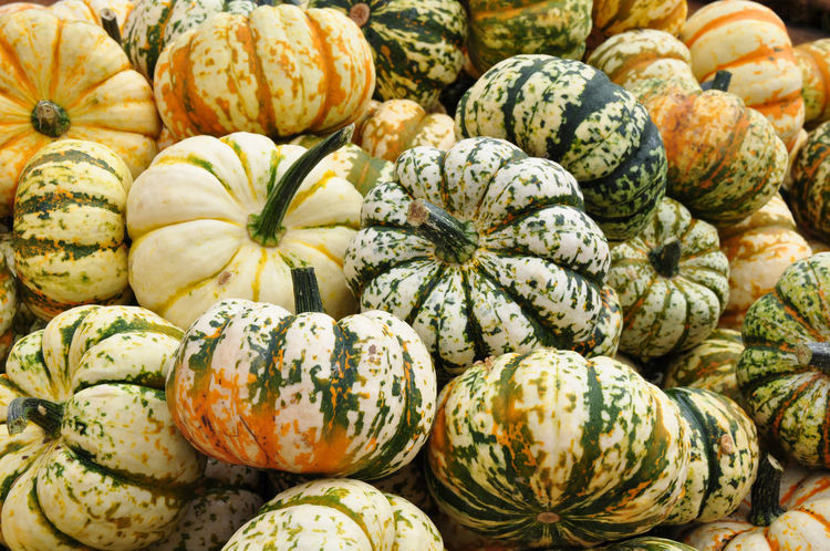 Pumpkins Autumn Backgrounds Colored Pumpkins Decorative Gourd Gourds Halloween Multi Colored Nature Pumpkin Raw Food Squash - Vegetable Vegetable White And Green Gourd
