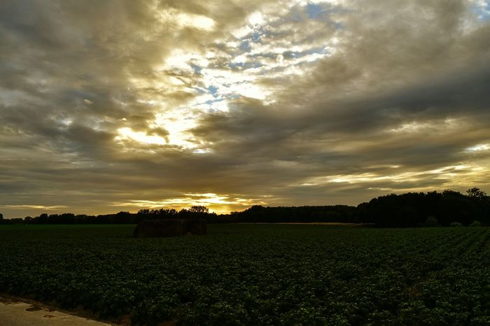Field Agriculture Cloud - Sky Nature Cloudscape Growth Crop  Beauty In Nature Freshness No People Sunset Landscape Rural Scene Storm Cloud Scenics Plant Flower Day Outdoors Fragility Sunset_collection sunset #sun #clouds #skylovers #sky #nature #beautifulinnature #naturalbeauty photography landscape