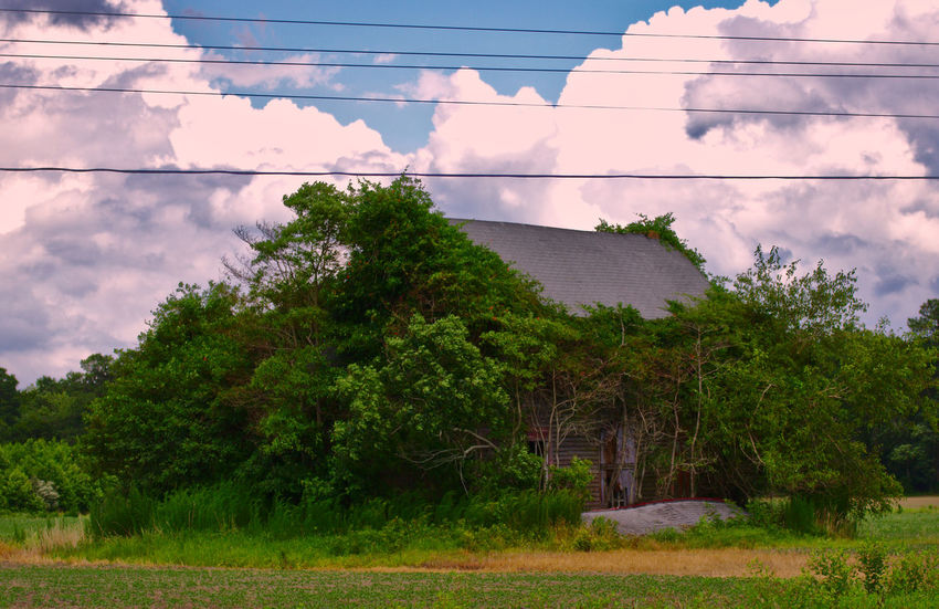 Architecture Beauty In Nature Building Exterior Built Structure Cloud - Sky Day Green Color Growth Nature No People Outdoors Plant Ruin Sky Tree