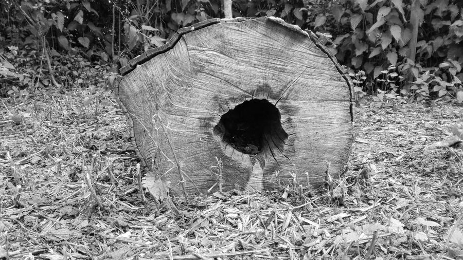 Sewer Circle Sewage Day Outdoors No People Nature Wood Wood - Material Nature EyeEm Selects Nature_collection EyeEm Best Shots Low Angle View France Blackandwhite Black & White B&w Black And White Green EyeEm Nature Lover EyeEm Gallery EyeEmNewHere Park Forest