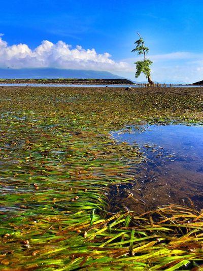 Treeoflife Ternate Island, Molucca Taramanyasal