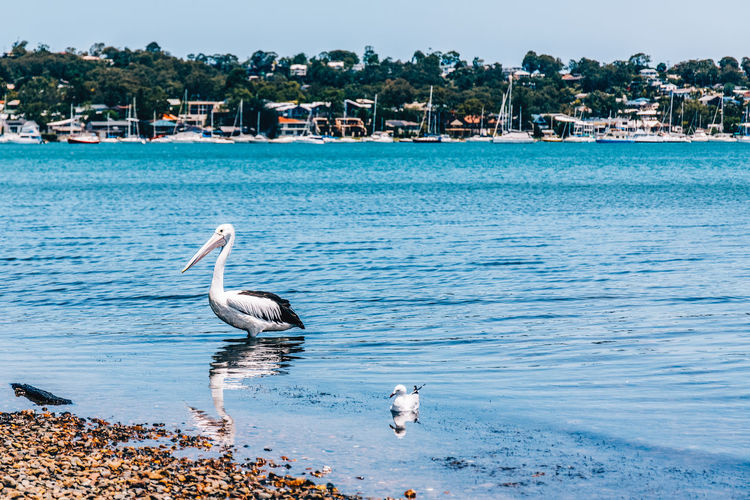 Animal Themes Animal Wildlife Animals In The Wild Beach Beauty In Nature Bird Day Flamingo Lake Macquarie Nature No People One Animal Outdoors Sea Sky Water