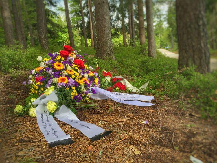 Waldfriedhof St.Georgen Baumgrab Forest Cemitery Forest Cemitery Tomb Forest Tomb