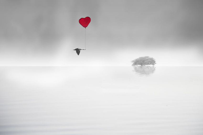 minimal Flying Bird Mid-air Red Sky Hot Air Balloon Kite - Toy Inflating Parachute Heart Shape Spread Wings Candy Heart Bagan