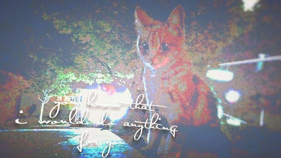 Kitty Cat Kittycat Kittylove Kittyporn Kitty Love♥ Cat♡ Cat Photography Song Lyrics Songlyrics Lovecats❤️ Lovecats The Cure The Cure 🎶 Thecure The Lovecats Parking Lot Photography Parkinglotmoment Parking Lot Parkinglot Cutecat LyricsandPhotography Lyrics Lyricsquote Cats 🐱 Cat