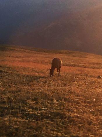 Summertime Estes Park, CO Morning Dawn Colorado Photography Rockymountainnationalpark Wildlife & Nature
