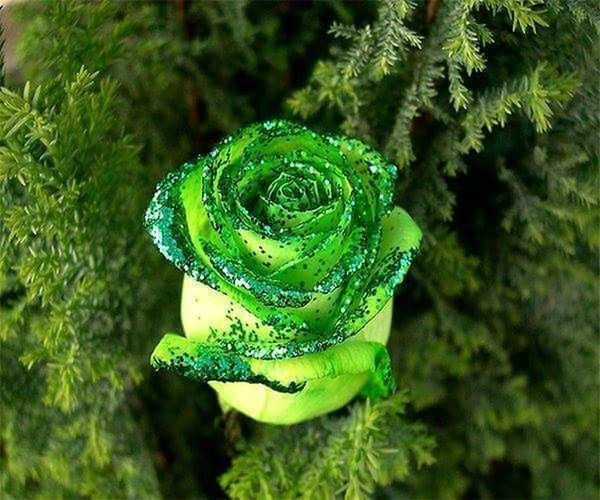 Hiiii Green Color Nature Close-up Plant Animal Wildlife Animals In The Wild Social Issues No People Outdoors One Animal Day Leaf Beauty In Nature Growth Animal Themes Water Tree