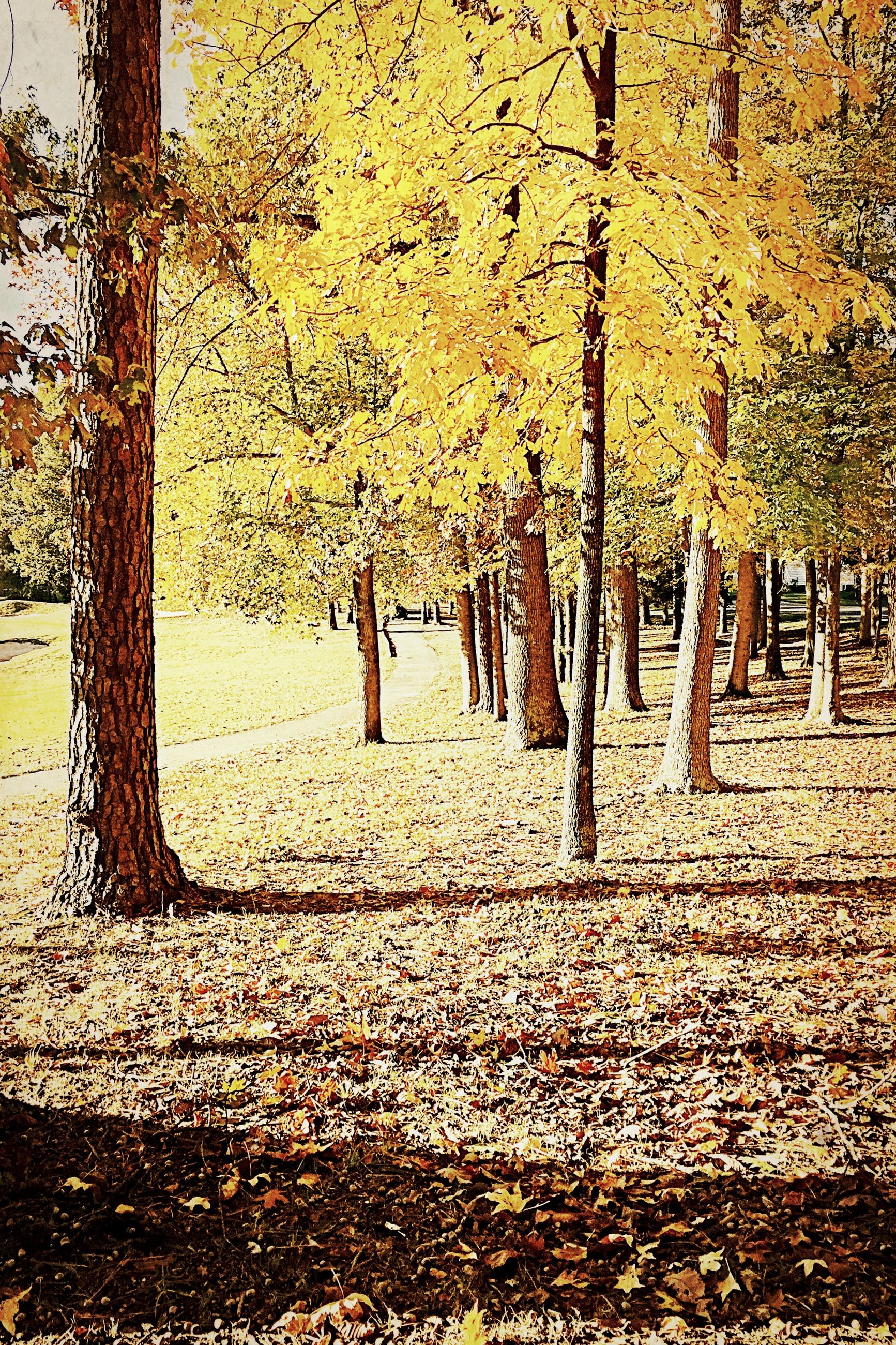 season, autumn, tree, change, leaf, yellow, street, nature, day, fallen, road, outdoors, growth, dry, weather, orange color, built structure, no people, wet, tranquility