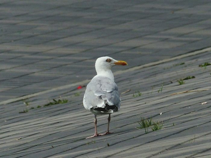 Nature Seagull Nature_collection Bird Photography Bird Seemöwe Background Maritime Coastal Life Wallpaper