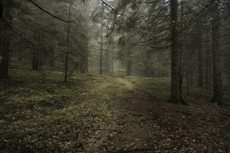 walk through foggy forest Beauty In Nature Branch Day Fog Forest Grass Landscape Nature No People Outdoors Scenics Tranquil Scene Tranquility Tree