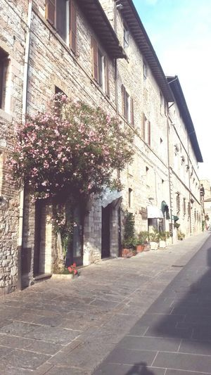 Assisi, Italy Italianstyle Building Exterior Architecture Outdoors Ivy Travelgram MyLifeInPictures Streets Flowers Wanderlust