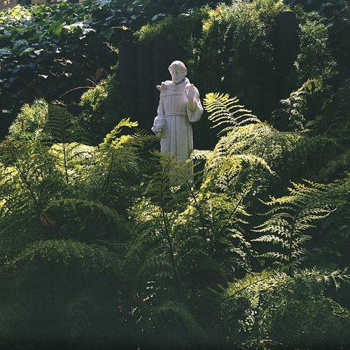Saint Saint Francis Of Assisi Plants Statue Ferns