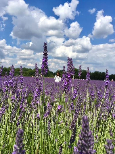 Purple Growth Lavender Field Flower Nature Lavender Colored Cloud - Sky Beauty In Nature Tranquility Sky Scented Landscape Agriculture Day Plant No People Scenics Outdoors Freshness