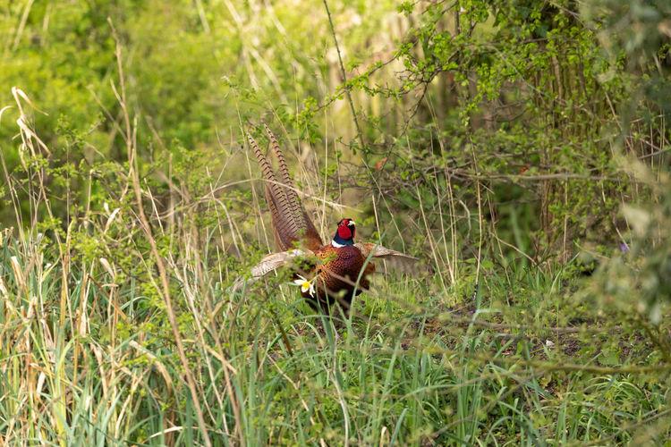 View of a bird on grass