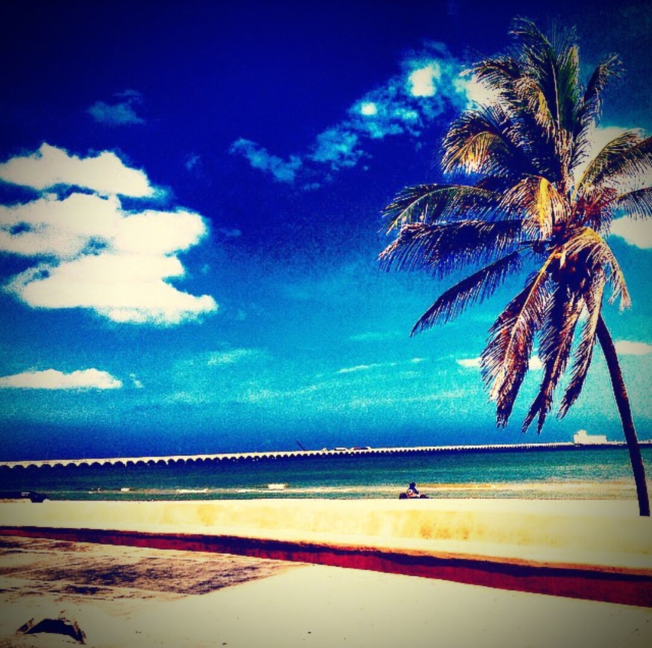 beach, palm tree, sea, sky, water, tranquil scene, scenics, beauty in nature, horizon over water, tranquility, nature, blue, sand, tree, cloud - sky, no people, outdoors, day, vacations, growth