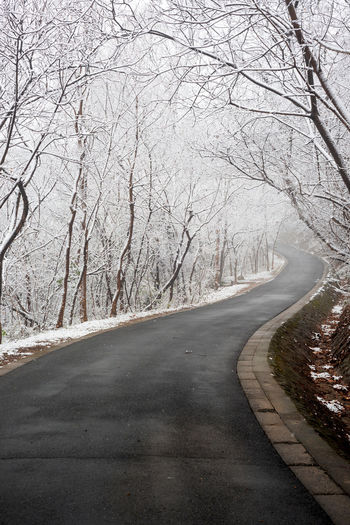 S road Tree Road The Way Forward Direction Bare Tree Plant Nature Curve Tranquility Empty Road No People Winter Snow