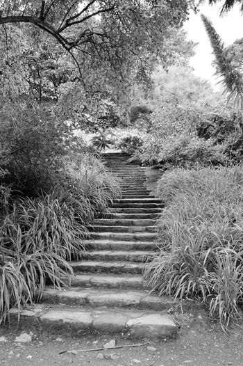 Beauty In Nature Black And White Forest Mount Stewart Mount Stewart Gardens Mount Stewart National Trust Nature Northern Ireland Outdoors Steps Tranquil Scene Tranquility Tree Walkway