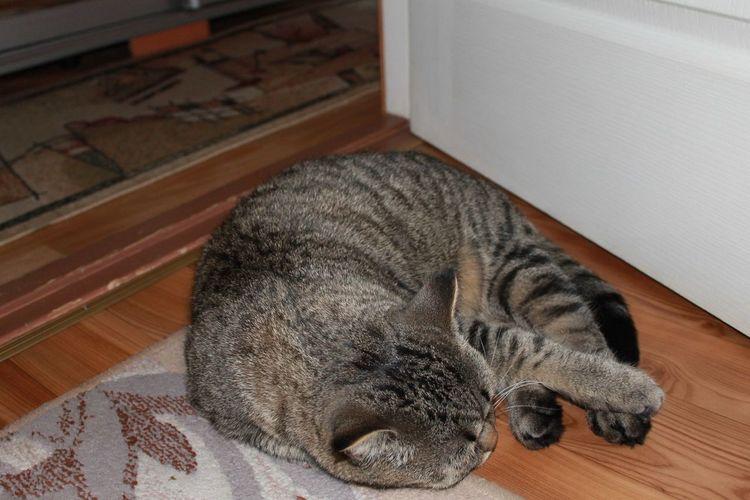 Cat♡ Lovecat♥ Sweet Beauty❤ First Eyeem Photo Love❤ Photo Animal Eyeem Photo EyeEm Ukraine EyeEm Dnipropetrovsk