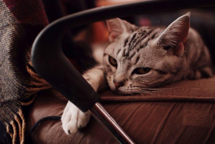 Cats Cat Mylittlefriend Mylove