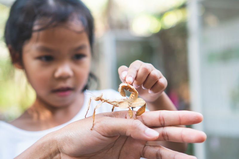 Close-up of girl touching at cropped hand holding insect