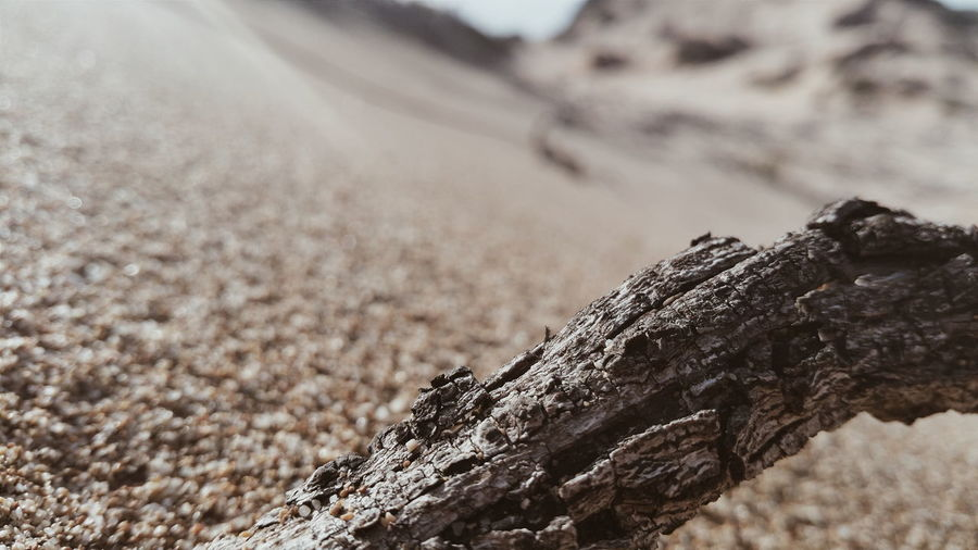 Extreme close up of tree trunk
