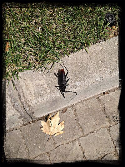 Gross!! WTF!? Bug Hunting Check This Out