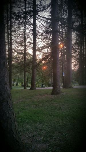 Sunset through the trees Enjoying The Sun Walking Around People Watching Escaping At Washington Square Park Albany New York Relaxing