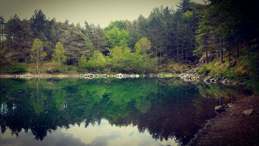 Reflection Water Nature Lake No People Forest Beauty In Nature Sky