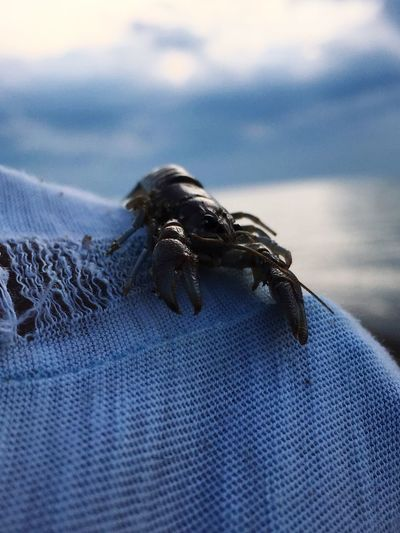 Close-up Nature Outdoors Beauty In Nature Sky Sunset Sea Life Holding EyeEmNewHere Crab Creativity Pet Portraits