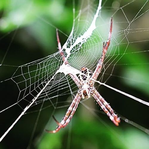 Victim traps. Spider Spiderweb KINGS_INSECTS Macroworld_tr Macro_holics Top_macro Bns_macro Tgif_macro