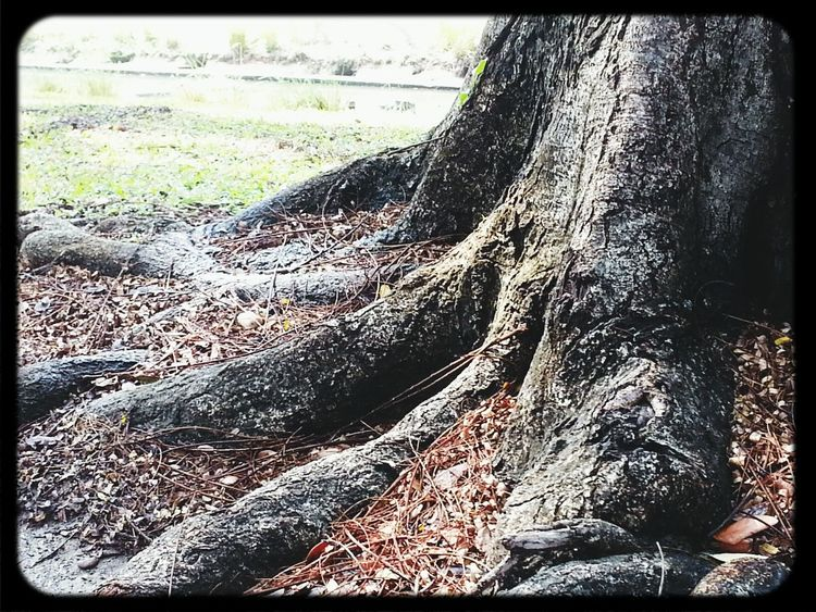 Gotta have roots before branches ♥ Tree Roots  Naturelovers Leonie Autumn