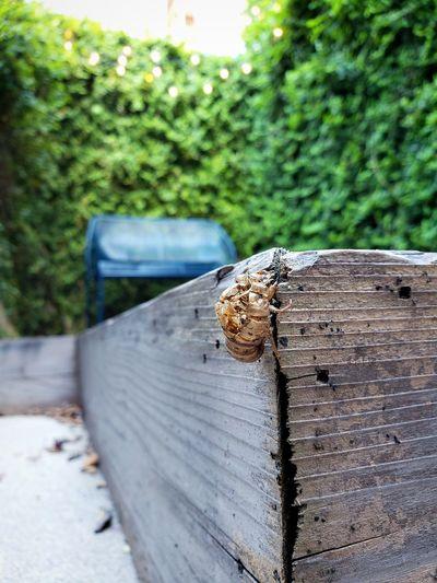 Close-up of cicada on railing